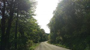 山道も新緑