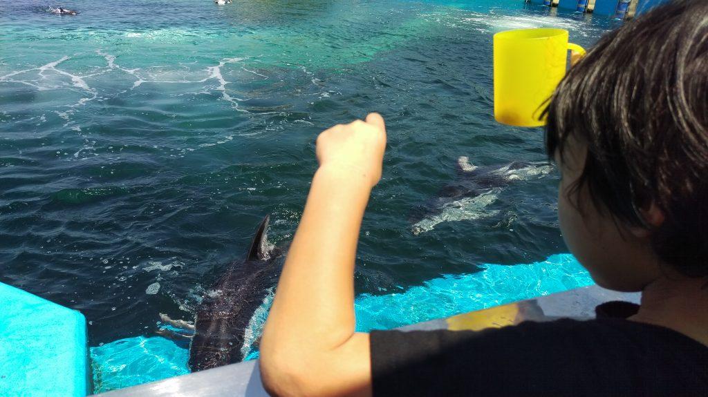 イルカ達の楽園でイルカに餌やり