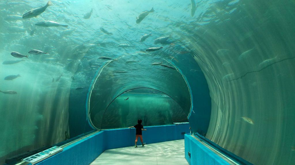イルカ達の楽園のトンネルの中の写真
