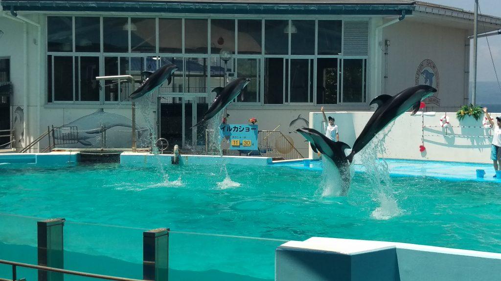 イルカショーの写真。イルカのジャンプ