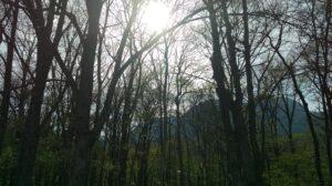 戸隠の山中の写真・緑
