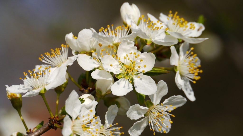 暖かい春、花の画像
