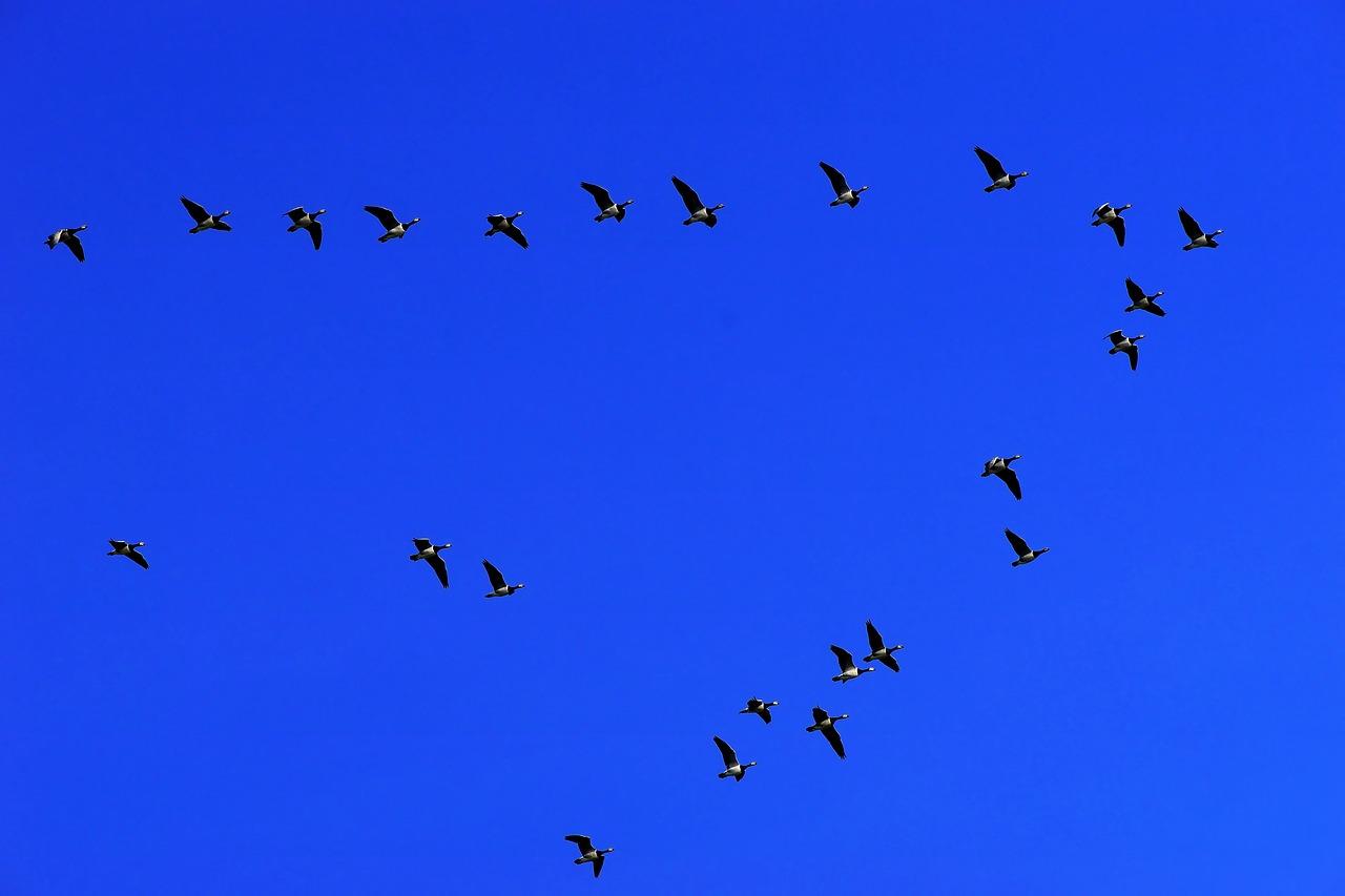 世界渡り鳥デーのイメージ画像