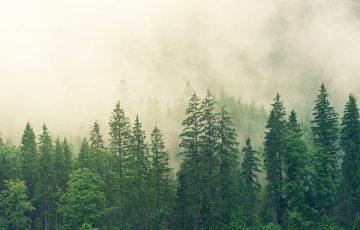森の木の画像