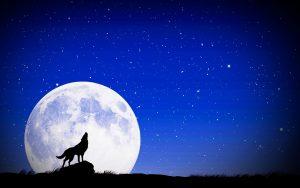 ウルフムーンのイメージ画像・オオカミと満月