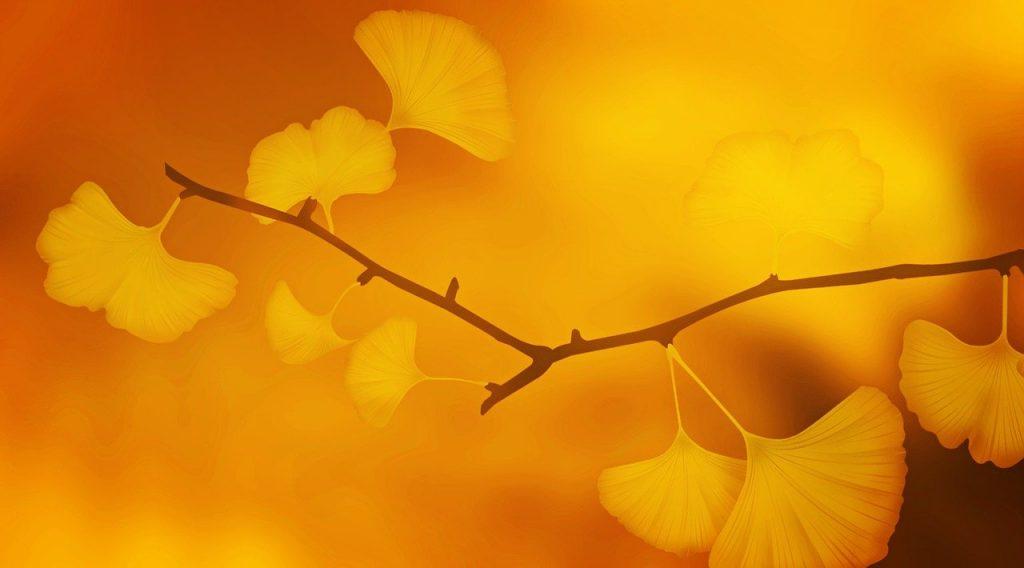 日本の秋・イチョウ