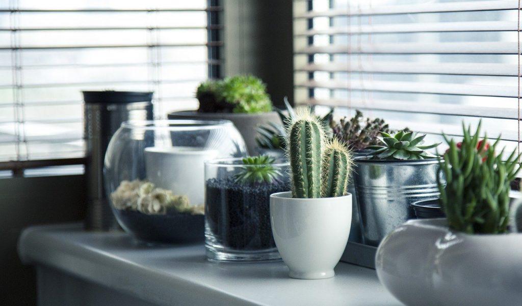 サボテン・多肉植物のイメージ画像